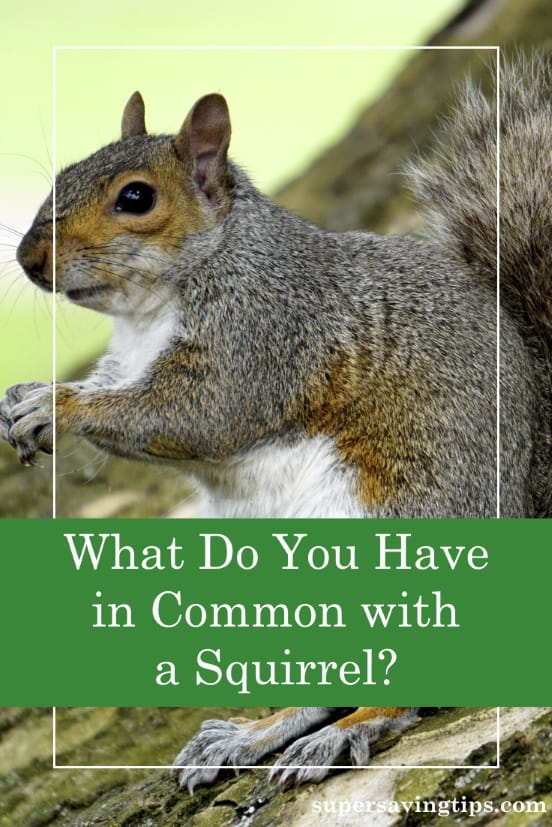 The squirrel has to prepare long in advance of winter to survive. Heed this lesson about preparing for retirement, and start right away!